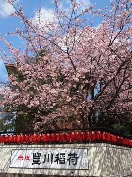 豊川 桜1.JPG